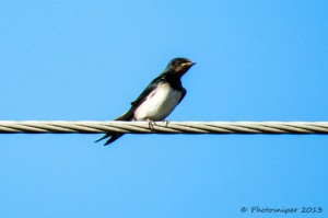 Swallow-Bennerley